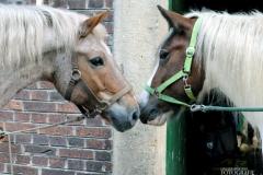 Pferde_Erlebnis-Pferd